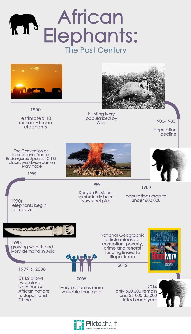 Untitled Infographic (8)