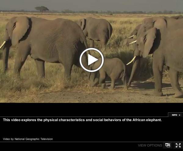 A natural history of the african elephant