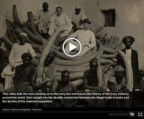 The history of the ivory trade